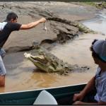 costa rica crocodiles 150x150 A Must Experience Crocodile River Adventure in Costa Rica!
