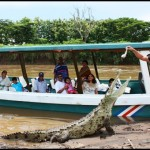 costa rica crocodiles 2 150x150 A Must Experience Crocodile River Adventure in Costa Rica!