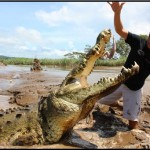 giant crocodiles costa rica 150x150 A Must Experience Crocodile River Adventure in Costa Rica!