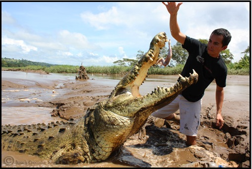 tarcoles_bridge_costa_rica_crocodiles